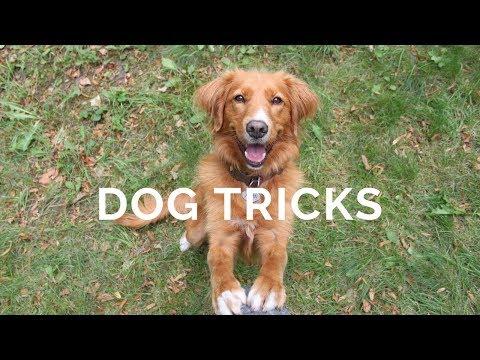 Alma the Toller, DOG TRICKS