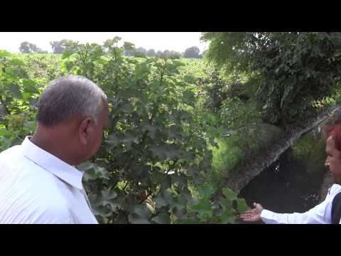 How to make Organic fertlizers for Growing crops in a village of Khanewal 6 Oc 2013 Pakistan
