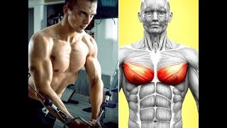7 BEST EXERCICES FOR LOWER CHEST/ BAS DES PECS