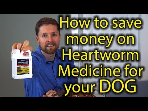 How To Save Money On Heartworm Medicine For Your Dog