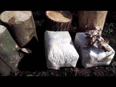 сколько жарить гриби