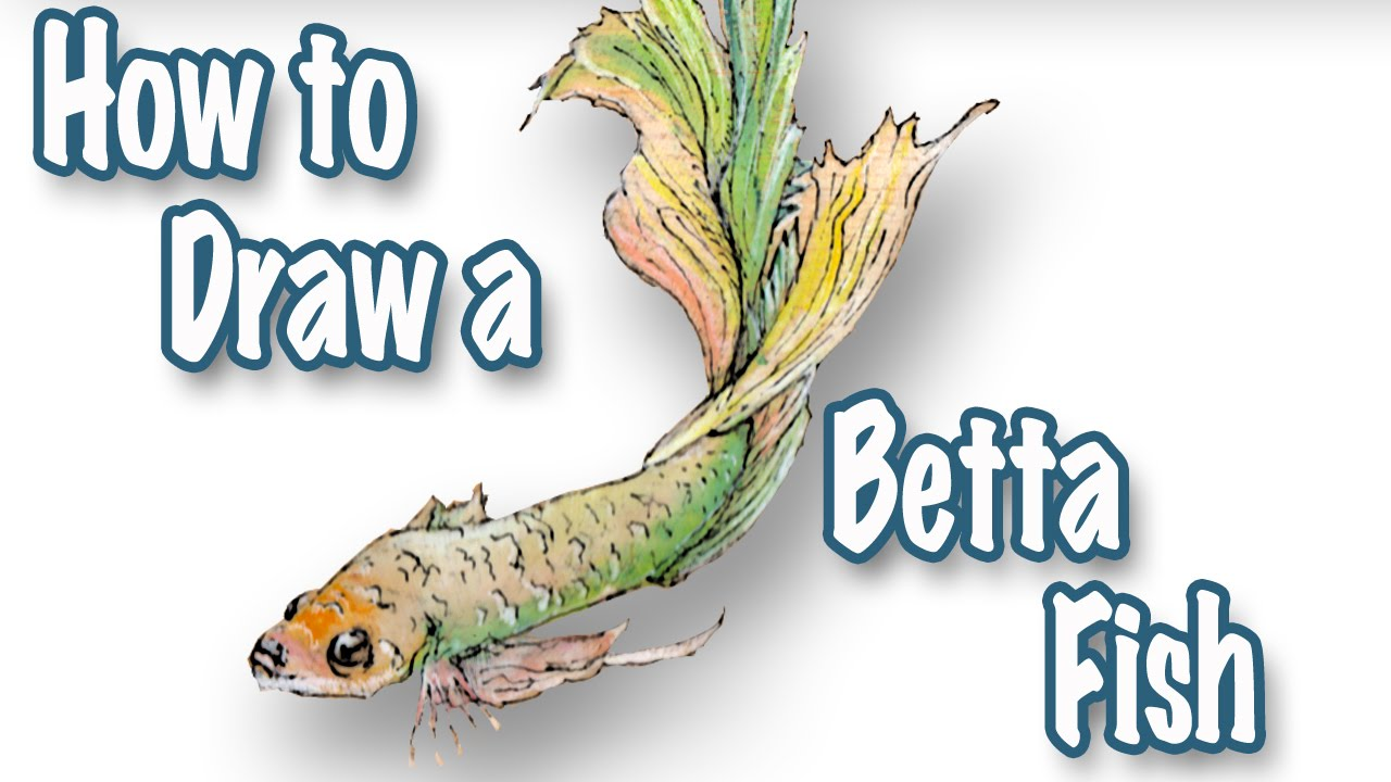 How to draw a betta fish speed painting youtube for How to paint a fish