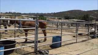 Afternoon at Oak Meadows Ranch Horse Rescue in Wildomar, California