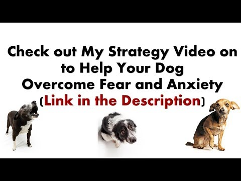 How to help a dog that's fearful and anxious - Introduction to Bentley