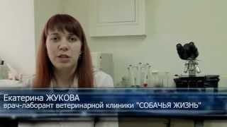 видео Лабораторные исследования животных (анализы) в Одессе