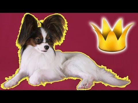 Королевский корги / Веселый ЮКИ устроил батл - кто лучший Король / Сериалити от ЮКИ 5 серия