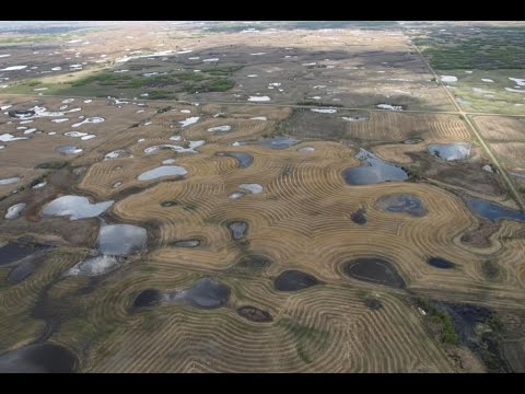 Mitigating Potential Impacts of Neonicotinoid Insecticides on Wetland Ecosystems