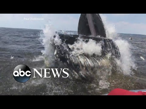 Whale surprises boaters off the coast of New Jersey