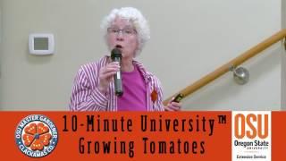 Growing Tomatoes in your Garden