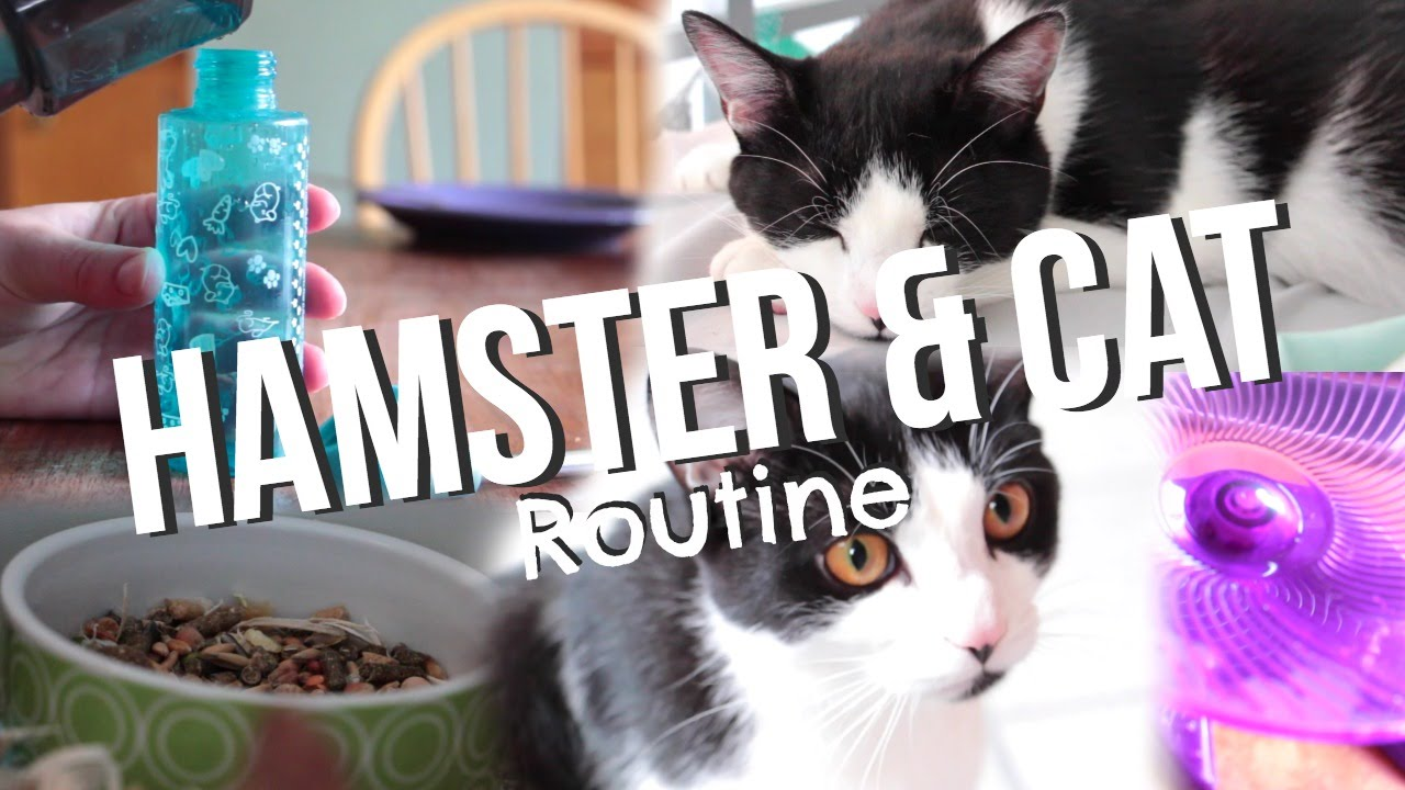 Hamster and Cat's Daily Routine - YouTube