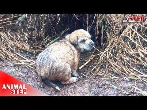 Abandoned Puppies Slept Under the Rain for Two Days, Finally Get Help