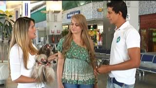 Transporte de Animais de Estimação em Aviões.mov