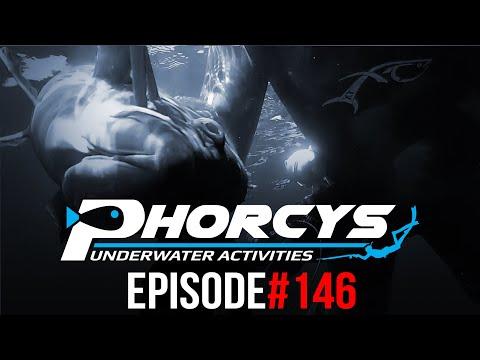 PHORCYS Spearfishing Worldwide Videos #146 - Underwater Activities 2019