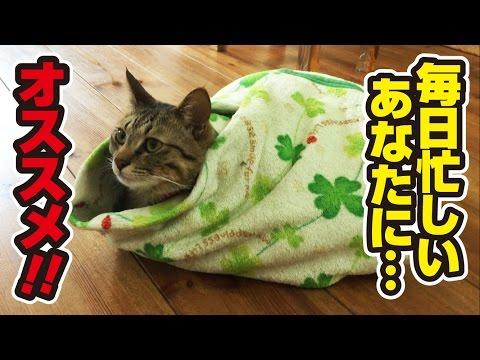 【超簡単!】ねこ餃子の作り方!~How to make packaged cute kittens!~