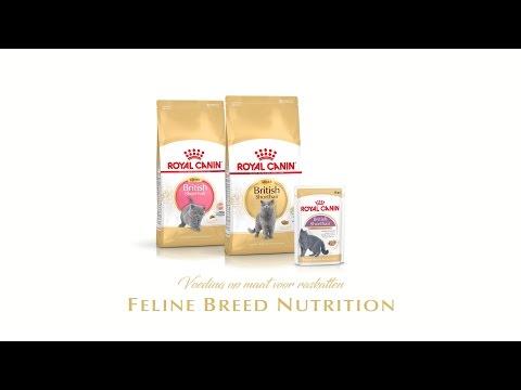 Feline Breed Nutrition British Shorthair Kitten - Adult - Wet