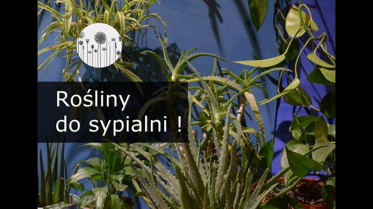 5 Roślin Do Sypialni Rośliny Oczyszczające Powietrze I Produkujące Tlen W Nocy