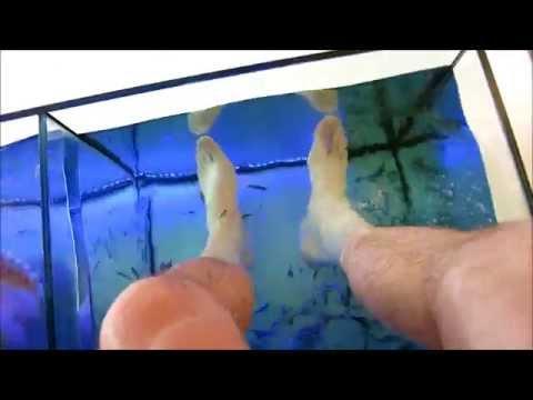 Fish Feeding on Our Feet