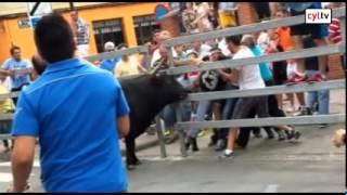 Un hombre de Medina del Campo recibe dos cornadas en el toro de la Feria