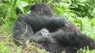 AFRYKA - RWANDA - Gorilla trekking