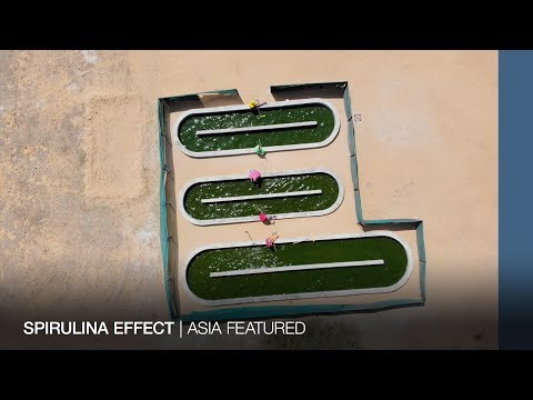 INDIA: Spirulina effect