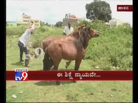 Hassan: Poor Horses were Beaten Badly for Grazing Crops