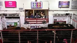 2-25-21 32 hd. Mix Steers 600 lbs. @ $160.10  Thank You Nathan Beckman