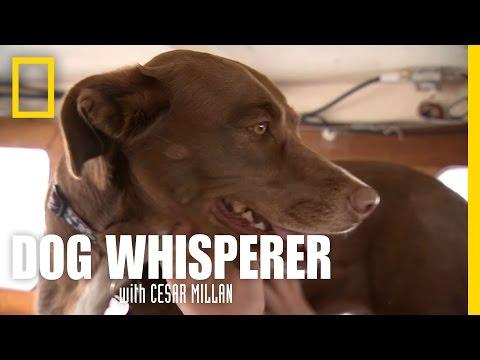Sony's Sea Legs | Dog Whisperer