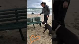 VIDEO Zielinski gioca in spiaggia col suo labrador Mia