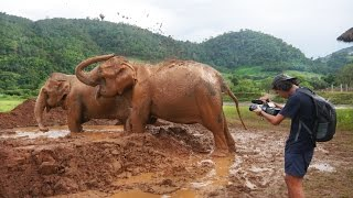 Elephant FREED After 85 Years in Chains