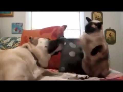 Приколы с кошками и котятами Улетное видео