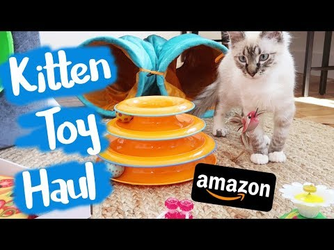 I Bought Weird Cat Toys From Amazon