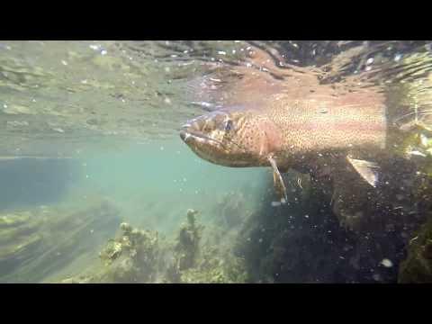 Patagonia Fly Fishing / Arroyo Pescado / Argentina