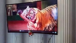 Обзор-отзыв о телевизоре  TCL L48P1FS