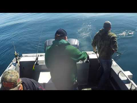 Coho / Chinook Salmon Fishing And Crabbing With Winchester Bay Charters