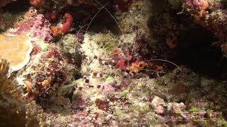 Science O.C.N. -  Deep Water Ocean Lounge - Life In Outer Space