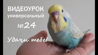 """🎶 Учим попугая говорить. Урок № 24: """"Удачи тебе!"""""""