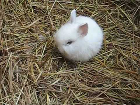 5 Kaninchen Bunny Babys 2 3 Wochen Alt