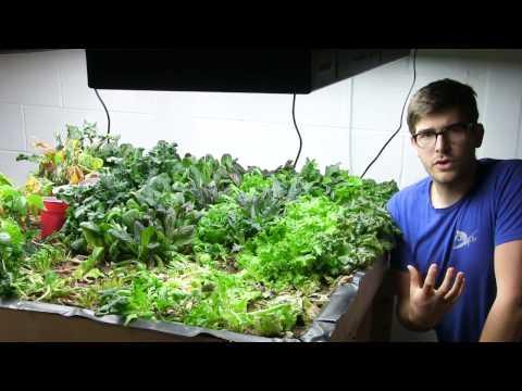 Final Harvest of Greens From the Indoor Organic Garden