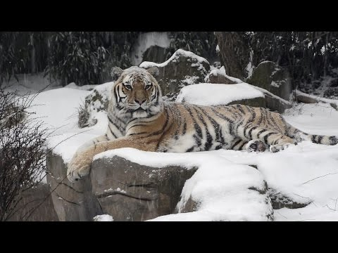 Animals at Oregon Zoo enjoy the snow