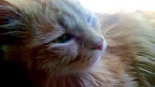 Кот Рыжик нуждается в Вашей помощи