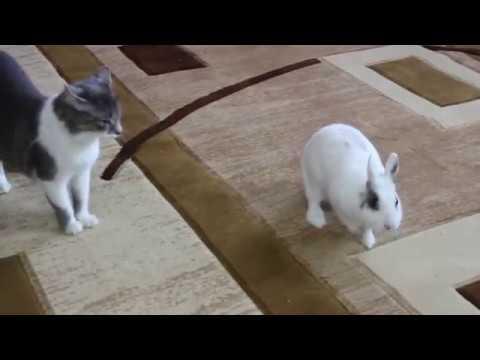 видео: Жизнь домашних животных