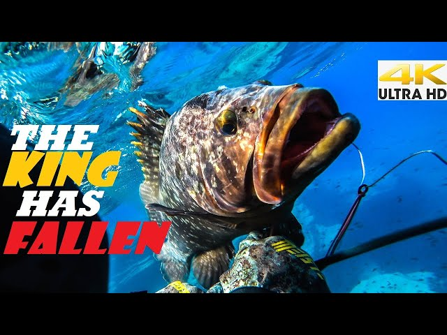 Spearfishing 🇬🇷 |THE KING HAS FALLEN👑Pole Spearing the Dusky Grouper [4K]✅