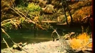 В Мире Животных - В.Песков - 198? Год