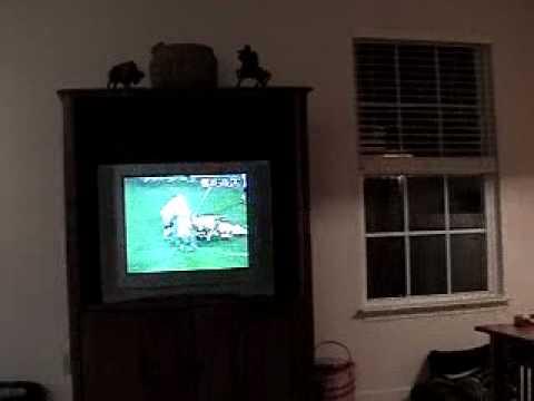 Colts Win - Superbowl XLI - 2007