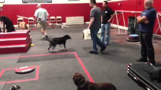 Sit Means Sit Dog Training Off Leash Class | Sit Means Sit