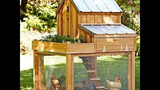 How to raise healthy backyard chickens and get their food for free!