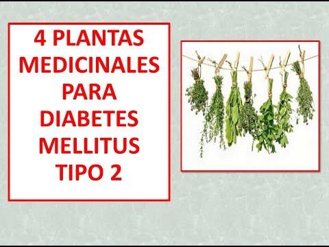 4-plantas-medicinales-para-diabetes-tipo-2-/-descubre-las-4-plantas-medicinales-lo-mejor-de-lo-mejor