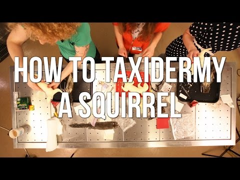 How to Taxidermy a Squirrel