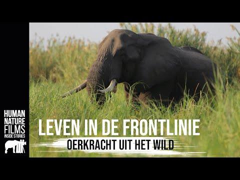 Oerkracht uit het wild - Leven in de Frontlinie