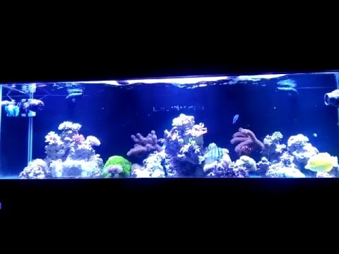 Solving Ph Problems In A Reef Tank | Beginner Guide To Saltwater Aquariums